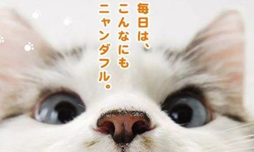 纪录片《猫咪物语》全5部日语外挂中文字高清视频合集[MP4/4.09GB]百度云网盘下载  纪录片 第1张