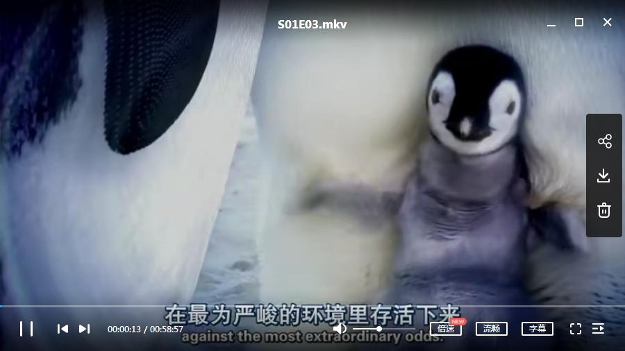 纪录片《企鹅群里有特务》全5集英语中文字高清视频合集[MP4/MKV/2.33GB]百度云网盘下载  纪录片 第2张