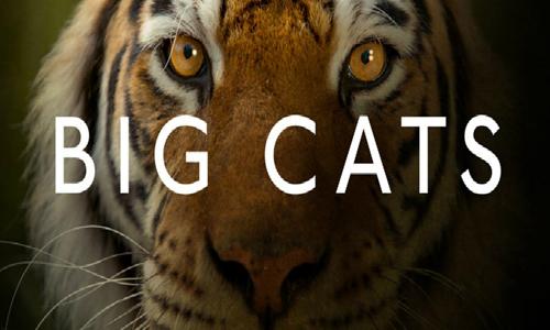纪录片《大猫/Big Cats》全三部高清视频英语中文字合集[MP4/3.28GB]百度云网盘下载  纪录片 第1张