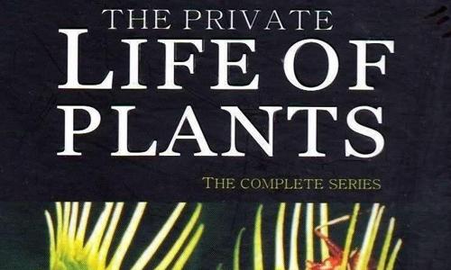 纪录片《植物私生活》全6集高清视频英语中文字打包合集[MKV/6.55GB]百度云网盘下载  纪录片 第1张