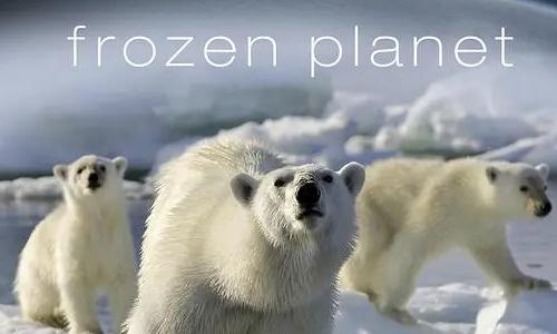 BBC纪录片《冰冻星球》全8集高清视频英语中文字幕合集打包[MKV/57.40GB]百度云网盘下载  纪录片 第1张