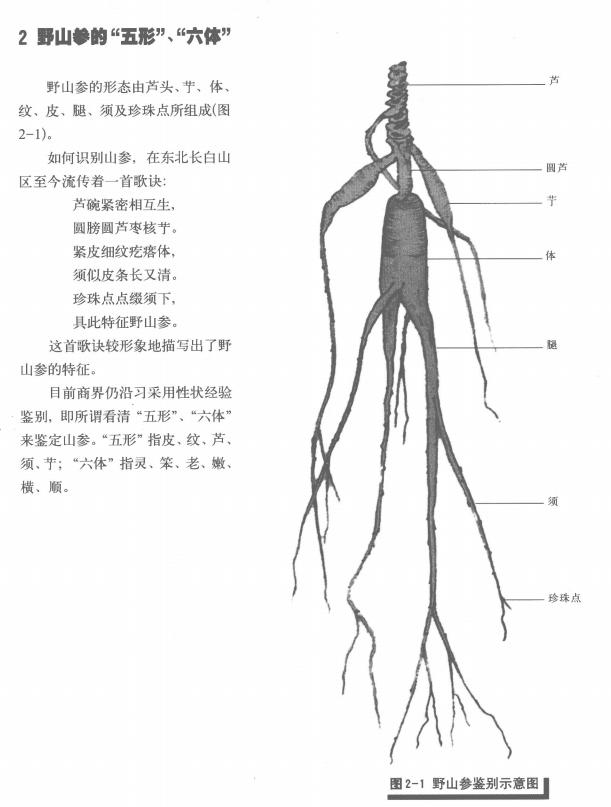中国野山人参图典高清电子书文档合集[PDF/15.50MB]百度云网盘下载  电子书 第2张